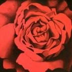 Mario Bardi - Rosa purpurea
