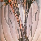 Vittorio Corona - Palme e vegetazione